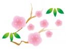 ピンク色の梅の花の年賀状イラスト