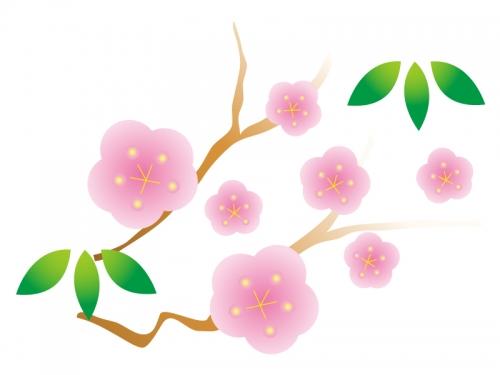 Pin 梅のイラスト 梅の花 on ... : 2015年賀状無料テンプレート 写真 : 年賀状