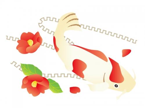 紅白の鯉と椿の年賀状イラスト
